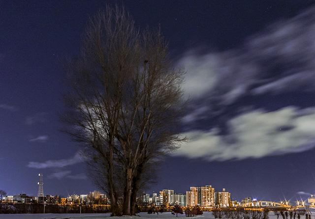 豊平川 カラスの住処の木